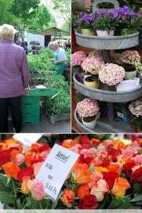 Impressionen vom Zürcher Markt am Bürkliplatz