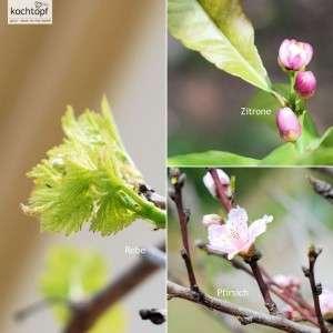 Garten Einblick 2015 KW 15 – Frühling ist meine liebste